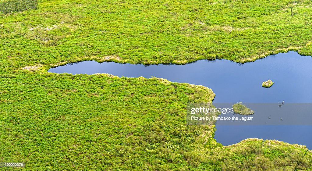 The Pantanal seen from the sky VII : Stock Photo