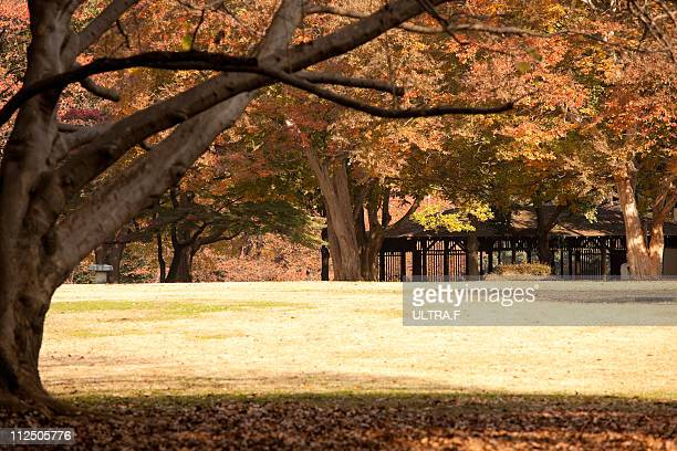 The park of colored leaves