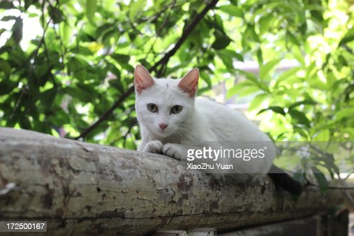 Cat Video Inc Bloomberg