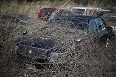 The passing of five years shows on a car park as vegetation and the elements begin to take their toll on homes and businesses inside the deserted...