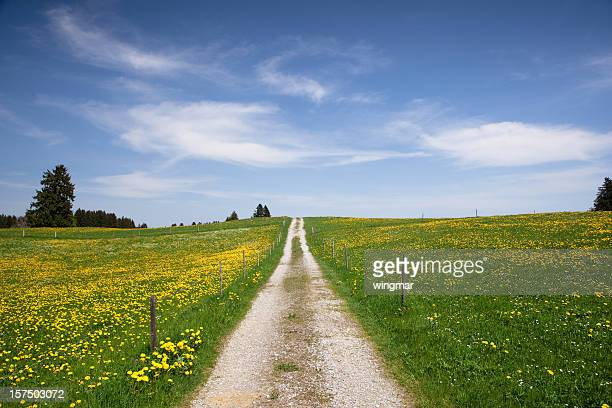 the path in meadow, springtime, bavaria - germany