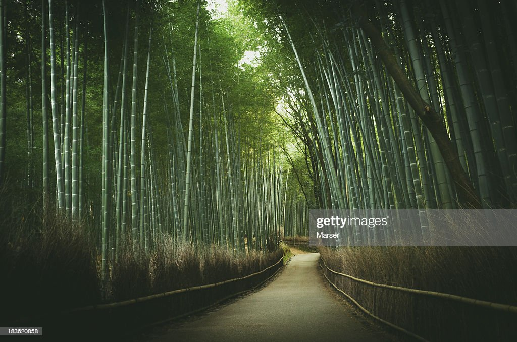 The path of bamboo near Arashiyama