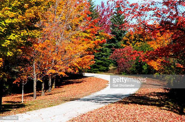 The Pathway into Fall