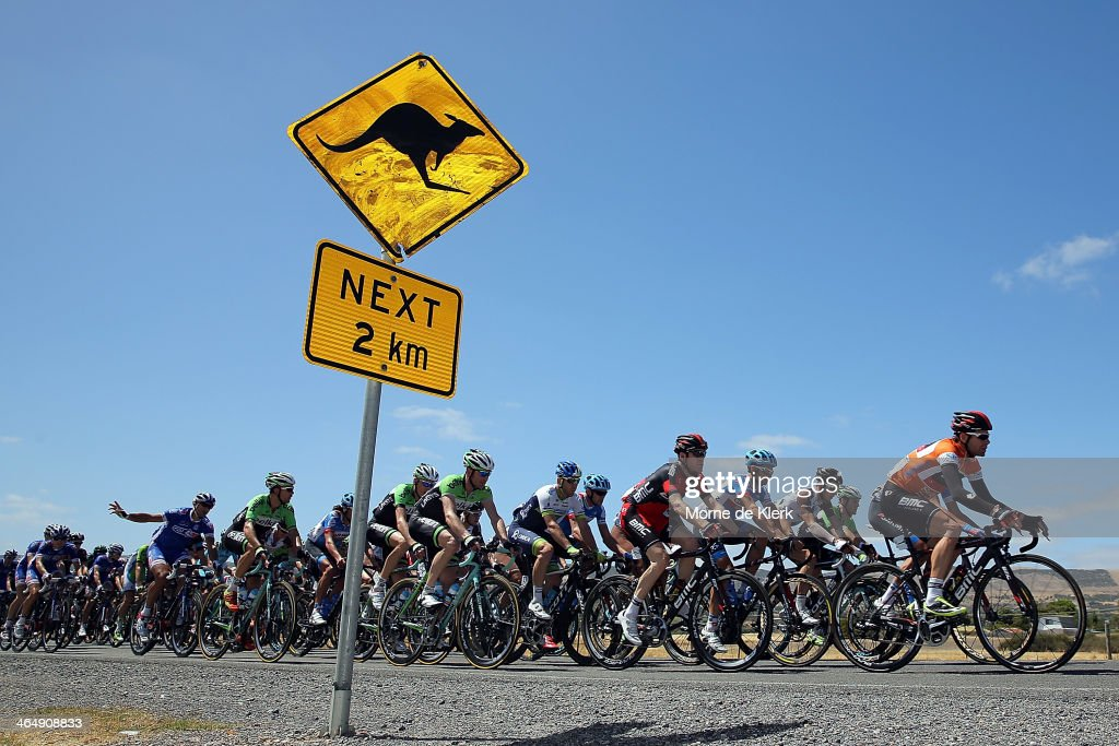 The peleton rides lead by <a gi-track='captionPersonalityLinkClicked' href=/galleries/search?phrase=Cadel+Evans&family=editorial&specificpeople=661127 ng-click='$event.stopPropagation()'>Cadel Evans</a> of the BMC Racing team during Stage Five of the Tour Down Under on January 25, 2014 in Adelaide, Australia.