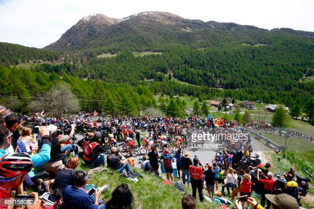 The peloton climbs the Mortirolo during the 16th stage of the 100th Giro d'Italia Tour of Italy cycling race from Rovetta to Bormio on May 23 2017 /...