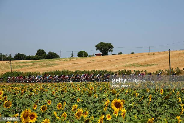 The peloton makes its way through stage thirteen of the 2015 Tour de France a 1985 km stage between Muret and Rodez on July 17 2015 in Muret France