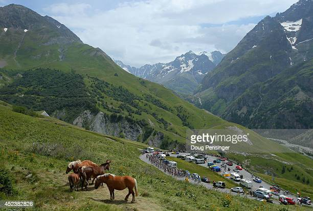 The peloton makes the climb of the Col du Lautaret as horses graze on the hillside during the fourteenth stage of the 2014 Tour de France a 177km...