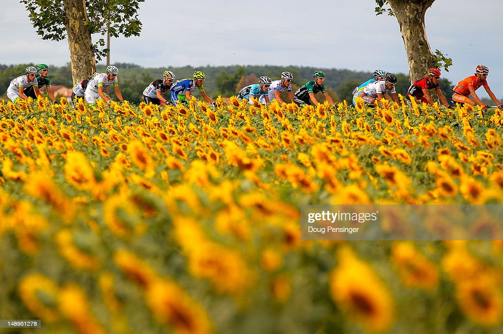 The peloton passes through a sunflower field during stage eighteen of the 2012 Tour de France from Blagnac to Brive-la-Gaillarde on July 20, 2012 in Blagnac, France.