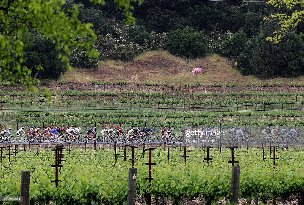 The peloton passes through vineyards during Stage Two of the Tour of California from Davis to Santa Rosa on May 17, 2010 in Napa County, California.