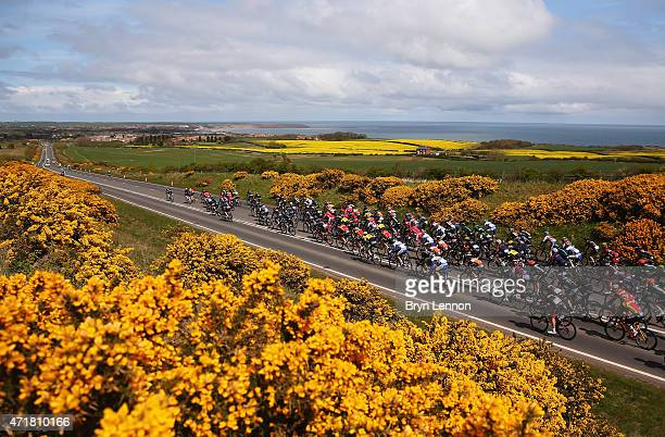 The peloton ride during Stage 1 of the Tour of Yorkshire from Bridlington to Scarborough on May 1 2015 in Scarborough England