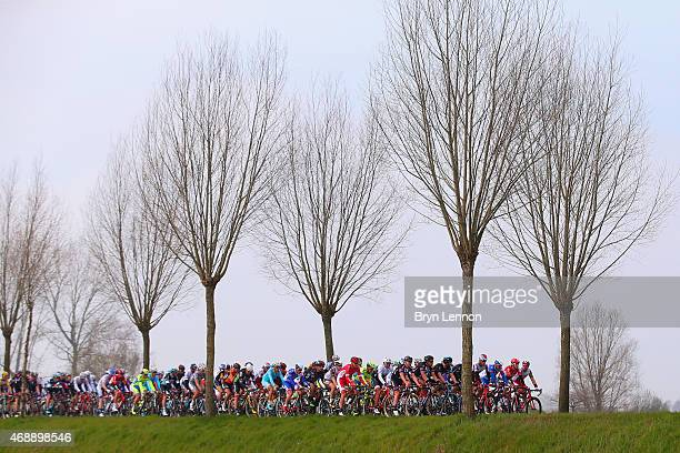 The peloton ride during the 103rd edition of the Scheldeprijs Cycle Race a 200km race from Antwerp to Schoten on April 8 2015 in Antwerp Belgium