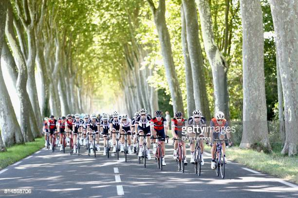 The peloton ride past a field of trees during stage 14 of the Le Tour de France 2017 a 181km stage from Blagnac to Rodez on July 15 2017 in Rodez...