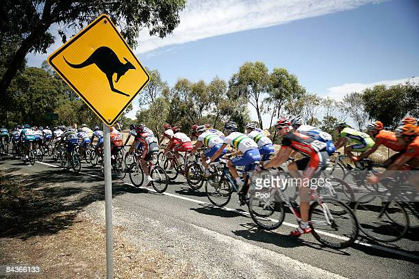 The peloton rides past a kangaroo warning road sign during stage one of the 2009 Tour Down Under on January 20 2009 in Adelaide Australia