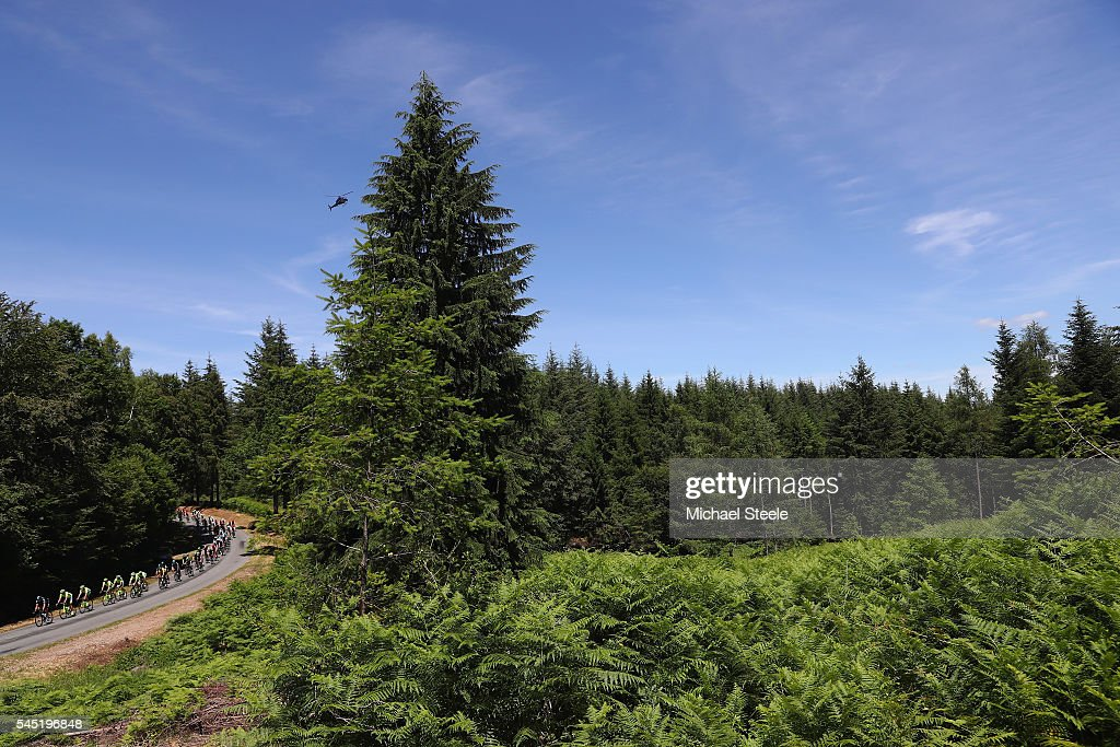 The peloton weaves its way through forestry land during the 216km stage five of Le Tour de France from Limoges to Le Lioran on July 6, 2016 in Limoges, France.