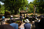 Wild Things: Perth Festival Takes Over Perth Zoo
