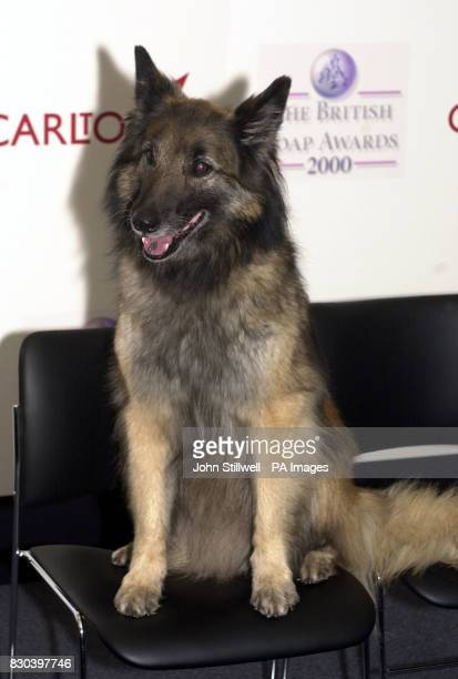 The pet dog of Eastenders character Robbie Jackson well'ard appearing at the British Soap awards 2000 at the BBC TV studios
