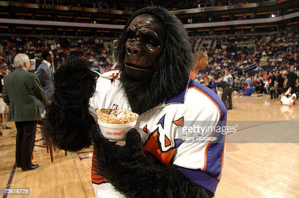 The Phoenix Suns Gorilla enjoys some Cold Stone Ice Cream as the Suns host the Detroit Pistons in an NBA game played on March 16 at US Airways Center...