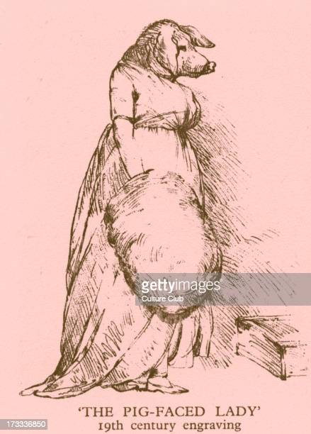 The pigfaced lady in a dress holding an enormous muff A Victorian freak show illusion achieved by shaving a bear's face 19th century engraving Tinted...