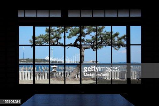 The pine tree over the window
