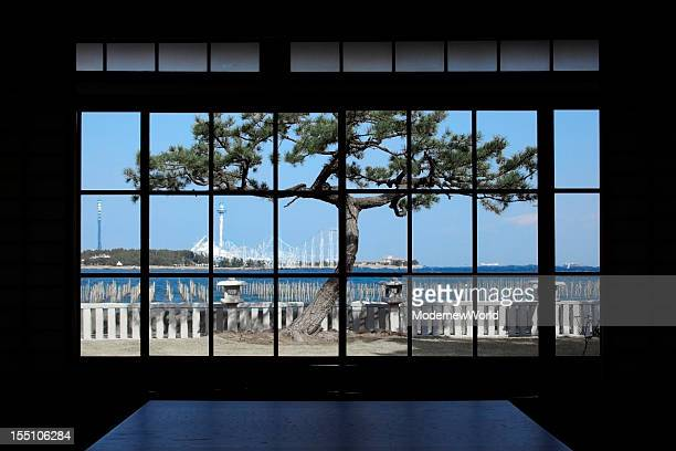 The pine tree over the window