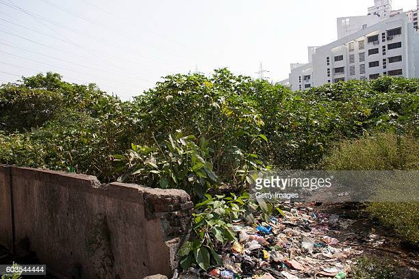 The place where 5 year old Nirmala was raped is seen on November 12 2015 in Maharashtra India One day Nirmala's mother gave her money to go to the...