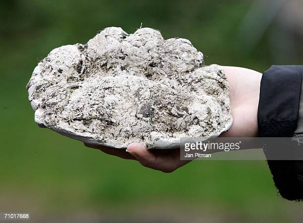 The plaster cast of a brown bear's paw print is pictured on May 23 2006 in Grainau near GarmischPartenkirchen Germany A brown bear probably coming...