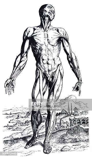 The Plates from the Second Book of the De Humani Corporis Fabrica by Andreas Vesalius