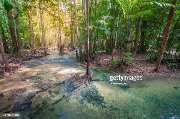 The plenty of forest and water krabi emerald pool National Park, Krabi Province, Thailand