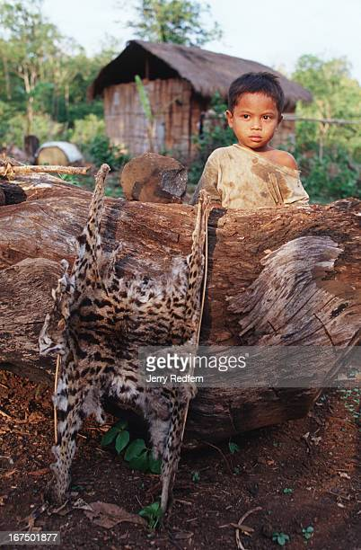 DAM SWAI MONDULKIRI CAMBODIA The Pnong know the Wildlife Conservation Society is trying to save wildlife in the area so they claimed this leopard...