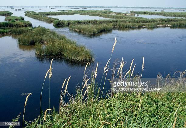The Po of Maistra Po Delta Regional Park Veneto Italy