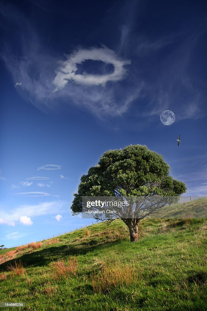 The Pohutakawa tree and a cloud with a hole in it : Stock Photo