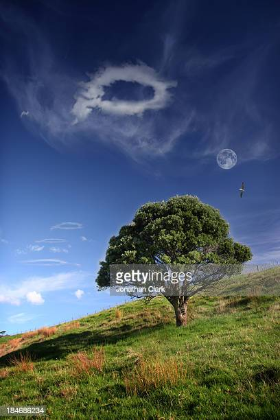 The Pohutakawa tree and a cloud with a hole in it