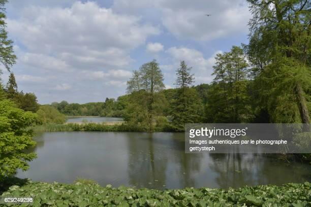 The pond between 'Etang du Moulin et Etang de la Longue Queue