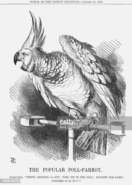 'The Popular PollParrot' 1866 The pollparrot is perched on the bar of universal suffrage reflecting the continuing agitation of the Reformists for...