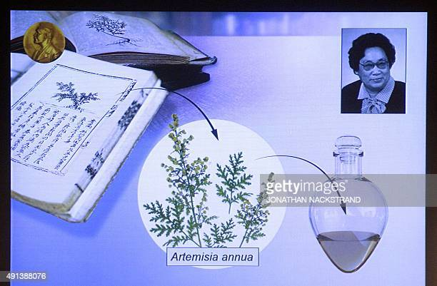 The portrait of China's Youyou Tu and an illustration describing her work are displayed on a screen during a press conference of the Nobel Committee...