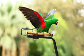 The pretty parrot on branch