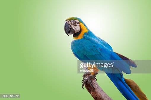 The pretty parrot on branch. : Stock Photo
