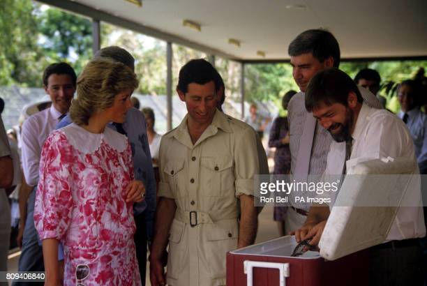 The Prince and Princess of Wales are shown a tiny baby crocodile during a visit to a crocodile farm at Noonamah near Darwin