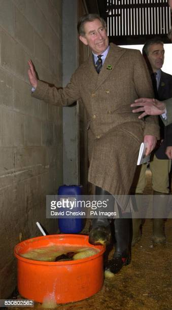 The Prince of Wales known as the Duke of Rothesay in Scotland dips his feet in a chemical bath to disinfect his boots as he visits the Perth Bull...