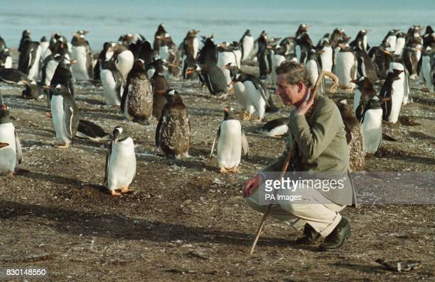 The Prince of Wales with Penguin's during a visit to Sea lion Island close to the Falkland Island's in the South Atlantic The Prince was on the 2nd...