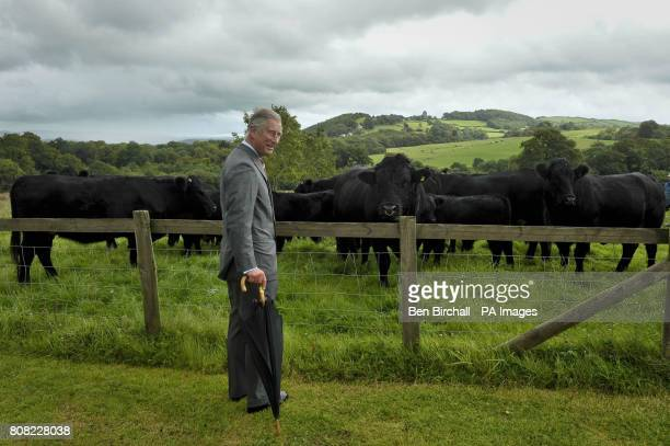 The Prince of Wales with some Welsh Black cows at the National Botanic Gardens of Wales in Carmarthen as he continues his tour of Britain to promote...