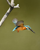 It is the moment when the kingfisher came out from the tree after the kingdom came down