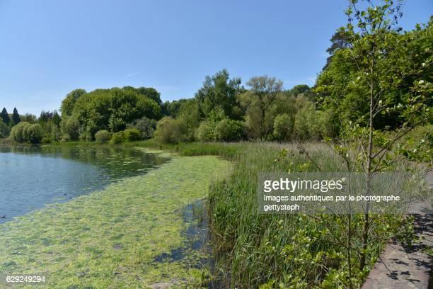 The putrid algae and reeds along l'Etang du Gris Moulin