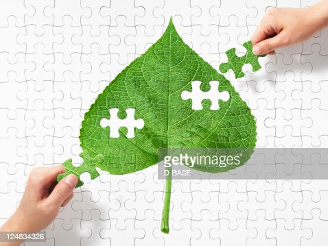The puzzle and piece of a picture of a leaf : Stock Photo