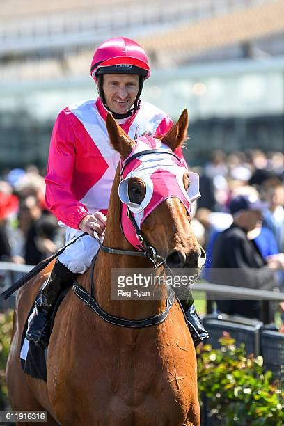 The Quarterback ridden by Matthew Allen returns after winning Gilgai Stakes at Flemington Racecourse on October 02 2016 in Flemington Australia