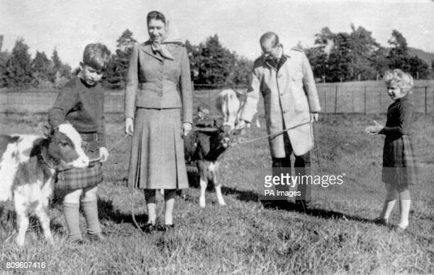 The Queen and Princess Anne look on as Prince Charles strokes an Ayrshire calf on the Balmoral Castle estate Scotland The Duke of Edinburgh playfully...