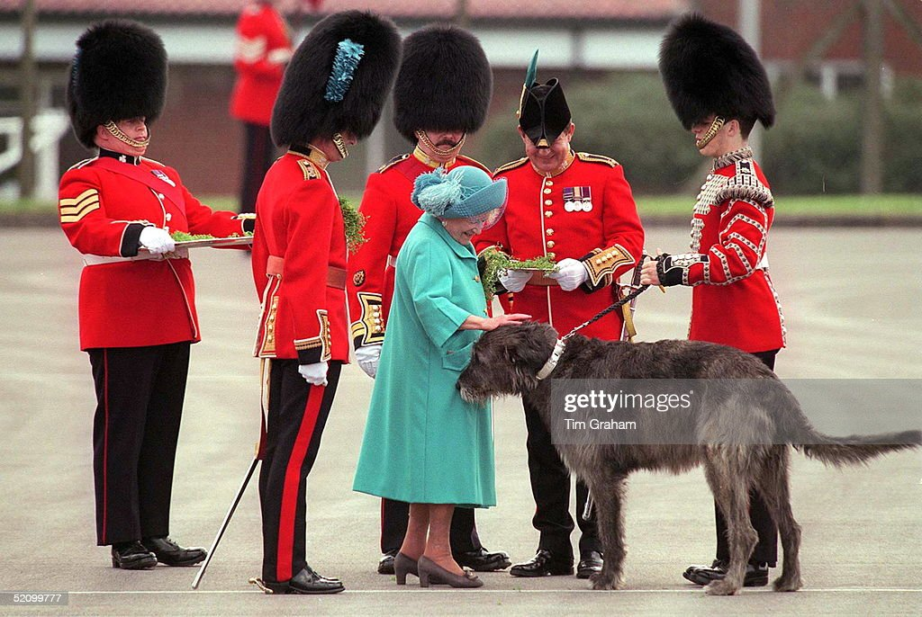 The Queen Mother With Officers Of The 1st Battalion Irish Guards At Elizabeth Barracks, Pirbright, Surrey, On St. Patrick's Day. She Is Patting The Irish Wolfound Cuchulain, The Regimental Mascot.