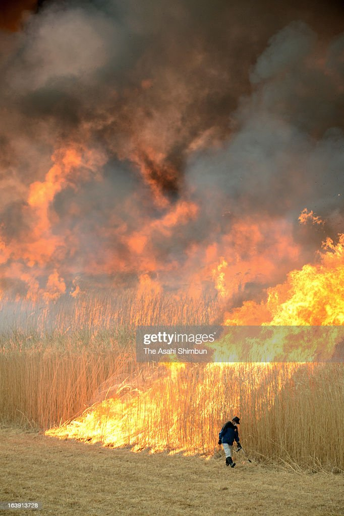 The reed field is seen being burned during the annual Yoshi-yaki ceremony in the Watarase Yusuichi Pond on March 17, 2013 in Tochigi, Japan.
