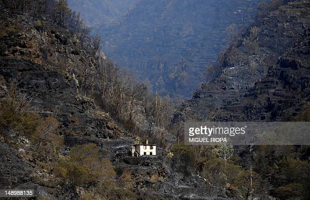 The remains of a burned house stand in a charred area after a fire in Santa Cruz on Madeira Island on July 21 2012 The problems started on July 18...