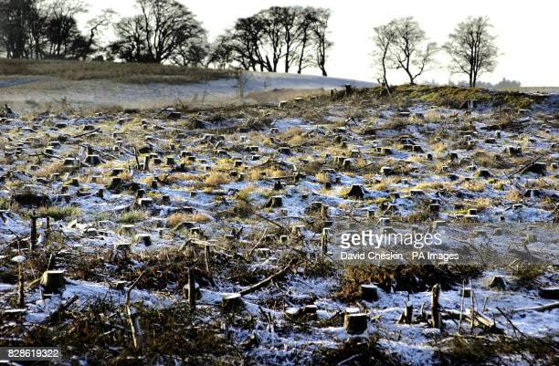 The remains of a forest in the Scottish Borders after it had been cut down Scotland is the most wooded area in the UK and one of the fastest...